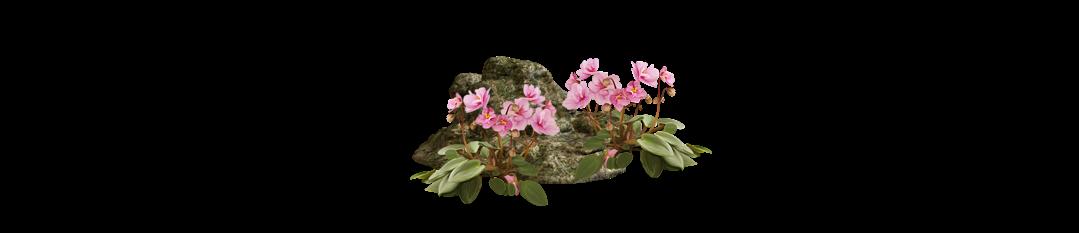 фен шуй цветок