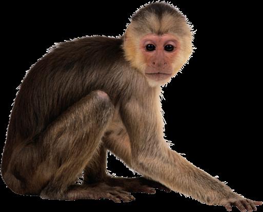 китайский календарь обезьяна