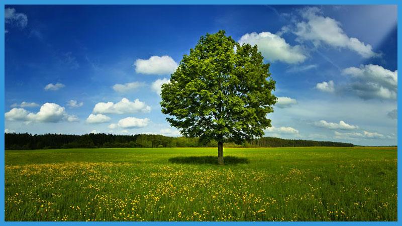 стихии по фен шуй дерево
