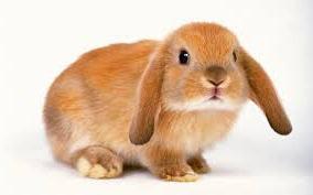 китайский календарь кролик